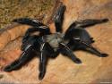 Tapeta Pavouček