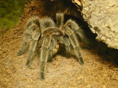 Tapeta: Pavouk 2