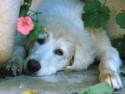 Tapeta Pes a květina