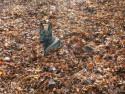Tapeta Pes v listí