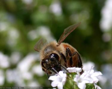 Tapeta: Pilná včelička 2