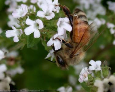 Tapeta: Pilná včelička 4
