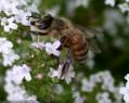 Tapeta Pilná včelička 5