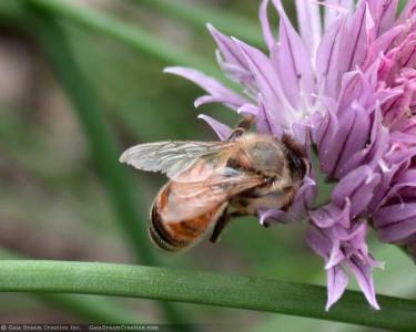 Tapeta: Pilná včelička 6