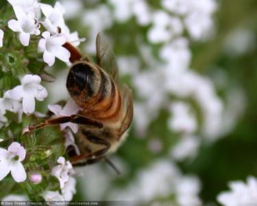 Tapeta: Pilná včelička 7