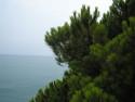 Tapeta Pinie a moře