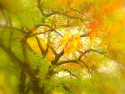 Tapeta Platan podzim