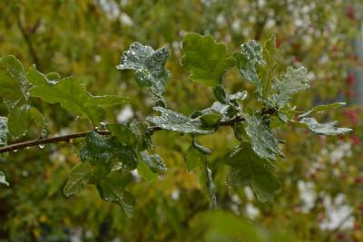 Tapeta: Po dešti 3