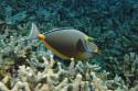 Tapeta Podmořský život 2
