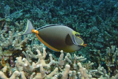 Tapeta: Podmořský život 2