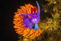 Tapeta Podmořský život 3