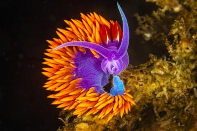 Tapeta: Podmořský život 3