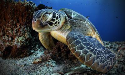 Tapeta: Podmořský život 4