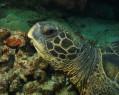 Tapeta Podmořský život 6