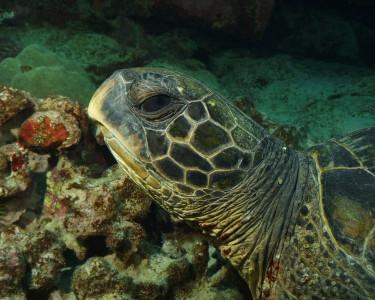 Tapeta: Podmořský život 6