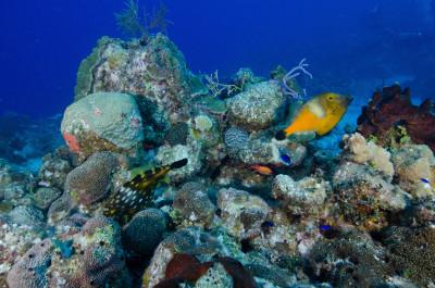 Tapeta: Podmořský život 7