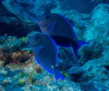 Tapeta: Podmořský život 8