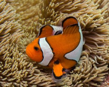 Tapeta: Podmořský život 9