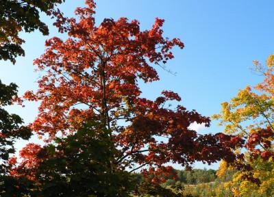 Tapeta: Podzim_001