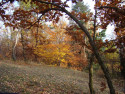 Tapeta Podzim 5