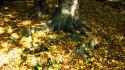 Tapeta podzim buk