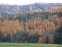 Tapeta podzim u Konětop