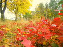Tapeta Podzim u řeky