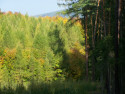 Tapeta Podzim v lese u Konětop II.