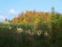 Tapeta Podzim v lese u Konětop III.