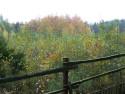 Tapeta Podzim v lese u Konětop IV.