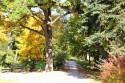 Tapeta Podzim v parku8