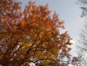 Tapeta podzim v parku 02