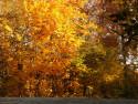 Tapeta Podzim v  UH