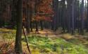 Tapeta Podzimn v lese