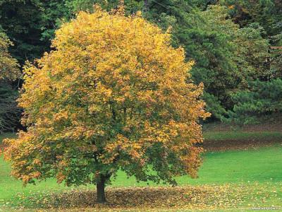 Tapeta: Podzim na Zemi 10