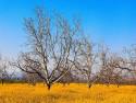 Tapeta Podzim na Zemi 2