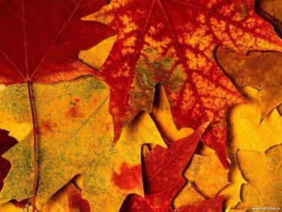Tapeta: Podzim na Zemi 3