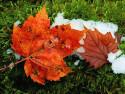 Tapeta Podzim na Zemi 5