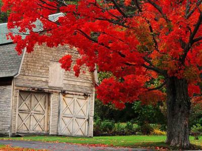 Tapeta: Podzim na Zemi 6