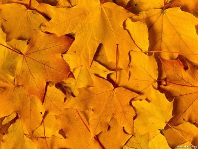 Tapeta: Podzim na Zemi 8