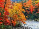 Tapeta Podzim na Zemi 9