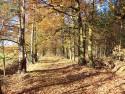 Tapeta Podzimní cesta