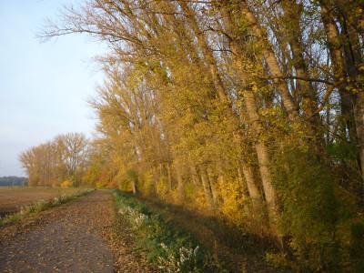 Tapeta: Podzimní cestou