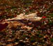 Tapeta podzimní list