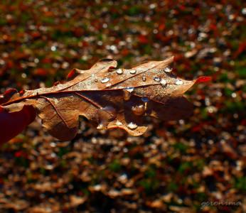 Tapeta: podzimní list