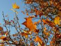 Tapeta Podzimní listí