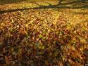 Tapeta Podzimní listí 2 KN
