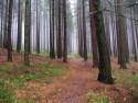 Tapeta podzimní mlha