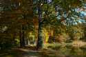 Tapeta podzimní park