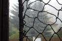 Tapeta Podzimní pavučina